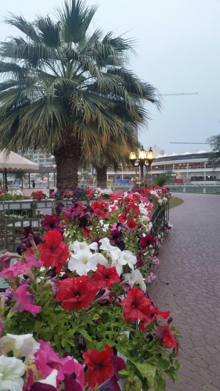 Pretty outdoors @ Houseboat - Bahrain
