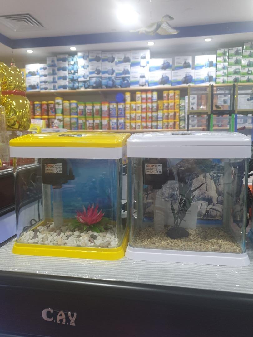 Golden fish - Bahrain